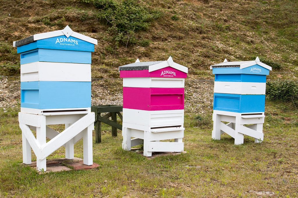 Adnams apiaries: the land is also home to barn owls, sand martins, and great crested newts